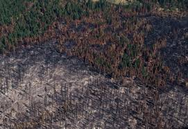 Largest Wildfire In Alberta History by Thousands Of Hectares Burned As B C Nears Worst Wildfire Season