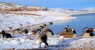 Utah wildlife tours images Fremont river guides