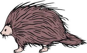 free porcupine clipart