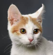 Pet Pet Of The Week Daisy Pets Billingsgazette Com
