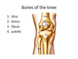 Knee Bony Anatomy Biomechanics Of The Knee Ppt Video Online Download