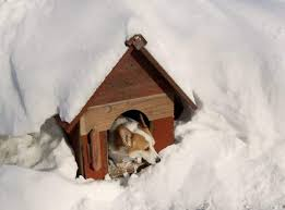 How To Build An Igloo In Your Backyard - diy cold weather dog house what to know