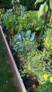 a late summer vegetable garden private newport