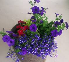how to plant outdoor potted flowers full sun plants flower