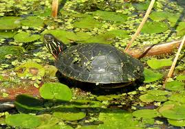 turtle a message from one of our spirit animals