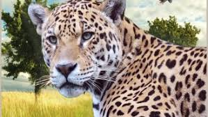 rare cat wallpapers cat leopard mammal wildlife clouded cats big rare pictures tuxedo