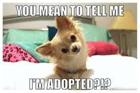 Funny Puppy Memes - funny puppy meme jaxon the chihuahua pinterest puppy meme
