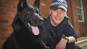 belgian shepherd townsville new police dog gordon set to u0027collar u0027 crime the northern daily