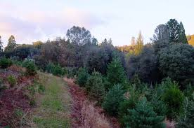 bramble hill tree farm home