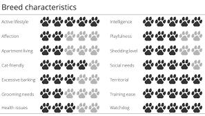 belgian sheepdog apartment meet the breed belgian malinois