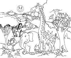 enchanted forest coloring pages deciduous animals rainforest