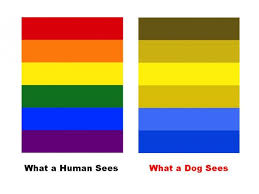 Color Blindness Psychology Do Dogs Actually Use Color Vision Psychology Today