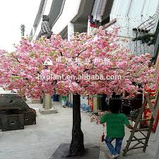 cherry blossom trees for sale cherry blossom trees for sale