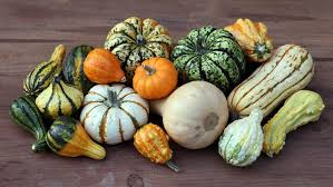 the differences between squash pumpkins and gourds