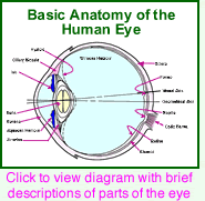 Eye Anatomy And Physiology Eye Anatomy Eye Spy Pinterest Eye Anatomy Science Biology