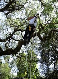 tree preservation emerald ca redwood city tree permits