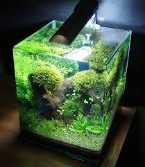 Aquascape Com Best 25 Nano Aquarium Ideas On Pinterest Betta Aquarium