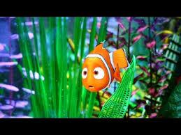 film kartun nemo budidaya ikan badut ikan nemo laptop si unyil 15 september 2015
