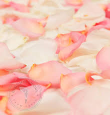 where can i buy petals wholesale pink white petals 3000 5000 petals free