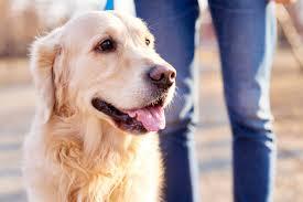 50 secrets your pet won u0027t tell you reader u0027s digest