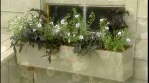 What To Plant In Window Flower Boxes - video how to plant flowers in a well made window box martha stewart