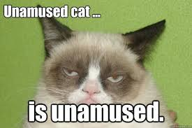Unamused Cat Meme - unamused 1 tard pinterest grumpy cat cat and meme