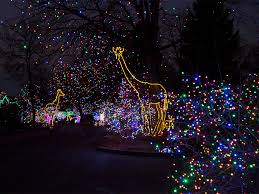 denver zoo lights hours gallery discover the magic of zoo lights at the denver zoo