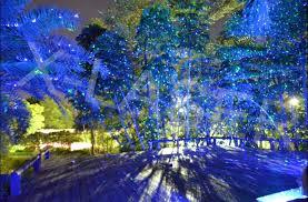 laser christmas lights trees white laser christmas lights large outdoor dma homes 34102