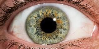 eye contact u2013 zoonooz