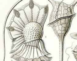 plankton drawing etsy