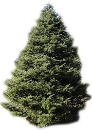 before you buy a real live tree things to consider home
