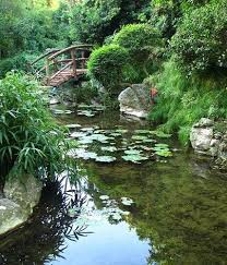 Zilker Botanical Garden Zilker Botanical Garden Conservancy Created To Revitalize S