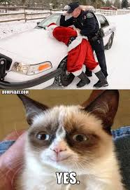 Grumpy Cat Memes Christmas - have a grumpy christmas