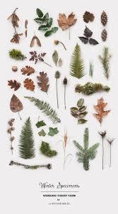 best 25 winter plants ideas on pinterest hardy plants blue