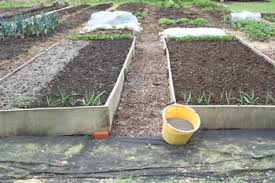 dec152 exp3 no dig organic gardening