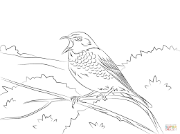 hermit thrush coloring page free printable coloring pages