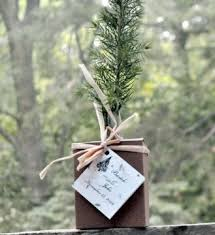trees seedlings in a box plant a memory favors gifts