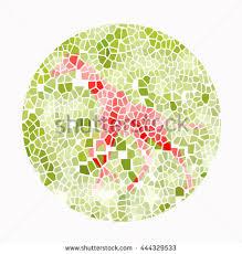 Color Blind Picture Test Color Blind Test S Stock Illustration 248497444 Shutterstock