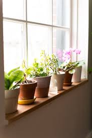happier houseplants how to keep indoor plants healthy apartment