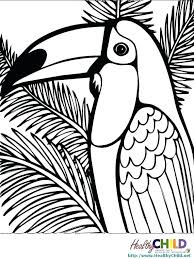 free coloring page of the rainforest rain forest coloring pages coloring page tropical coloring pages
