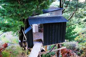 the best hut tree bach tree house new zealand plastering