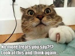 Cartoon Cat Memes - funny cartoon cat shit funny pics story