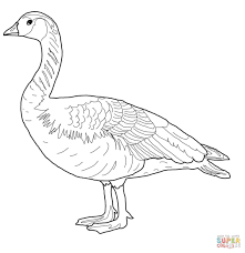 canada wild goose coloring page free printable coloring pages