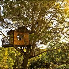 Cool Tree Houses 9992 Best Boomhut Images On Pinterest Treehouses Architecture