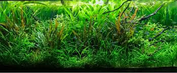 amano aquascape tamed jungle 120p takashi amano inspired tribute uk aquatic