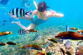 Iowa snorkeling images Snorkeling at a beach paradise redang island malaysia hs insider jpg