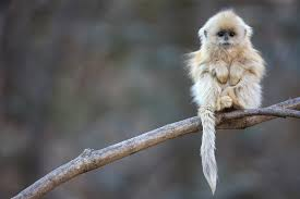 monkey day pictures our favorite primates around the world