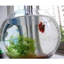 Glass Vases Australia Fish Bowls Vases U2013 Www Affirmingbeliefs Com