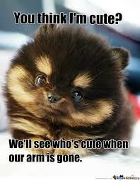 Cute Puppies Meme - aggressively cute puppy by recyclebin meme center