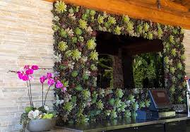 Ideas For Indoor Succulents Design Awe Inspiring Succulent Living Wall With Plant Design Painting